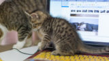 wordpressでブログを始めるメリットとデメリットまとめ